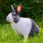 Woolton Veterinary Centre - Rabbit2
