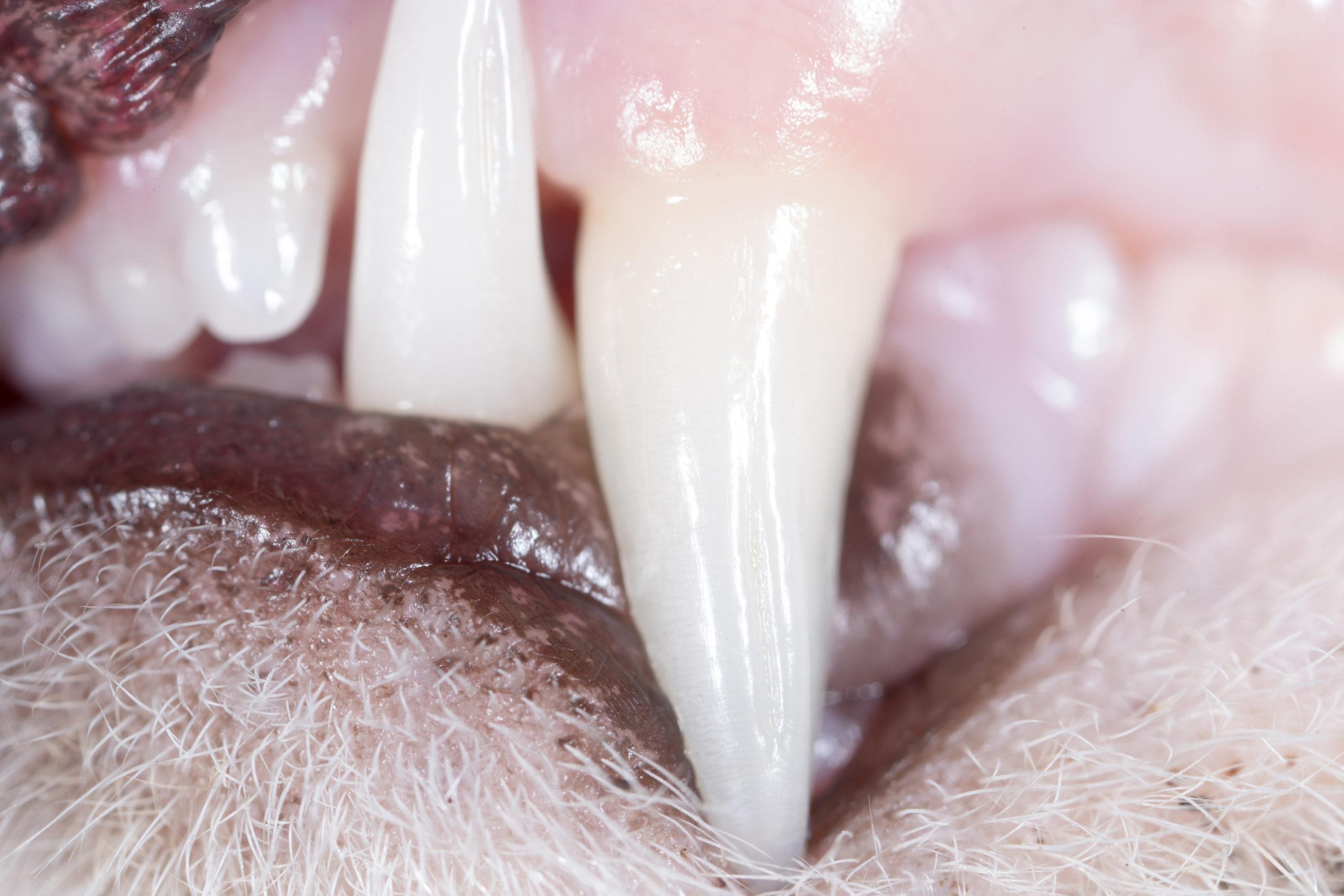 Pet Dental Health | Woolton Vets in Liverpool