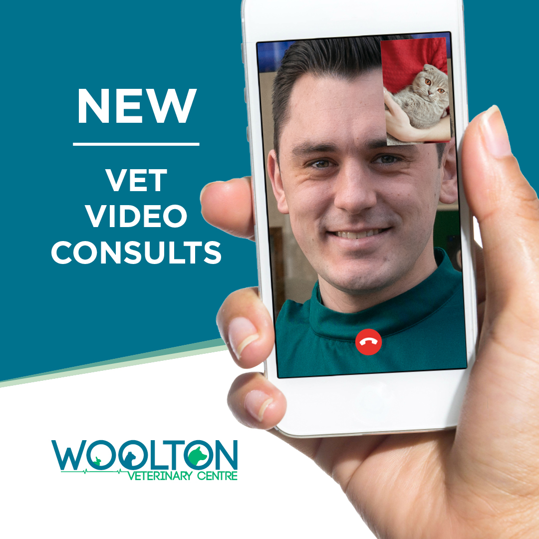 New Vet Video Consults: For local local pet owners in Woolton Village