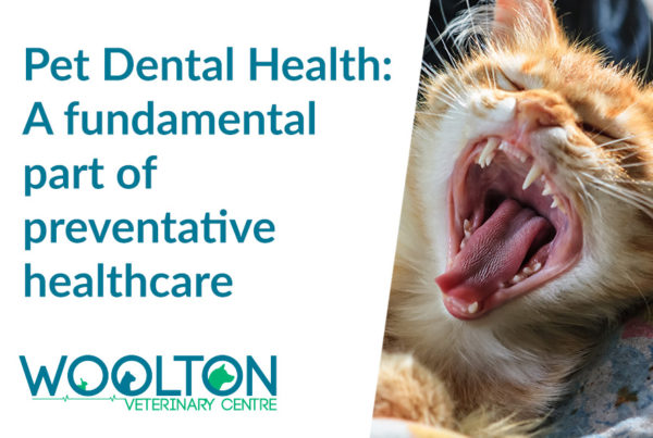 Pet Dental Health | Woolton Vets in Liverpool